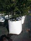 White Planter Bag